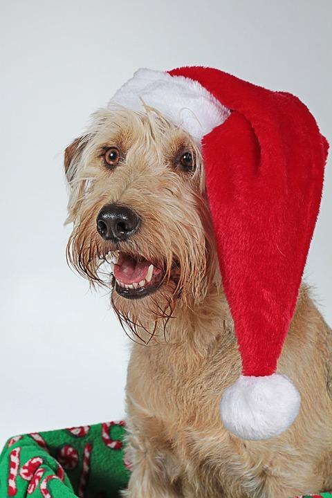Navidad, Perro, Cabeza, Animal