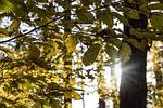 forest, shine, sun