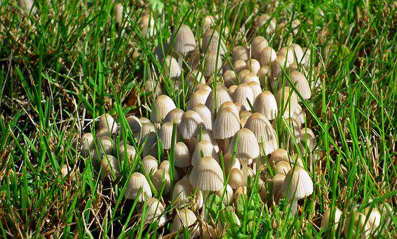 Nature, Lawn, Plant, Mushrooms