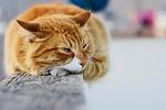 cute, animal, cat