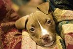 puppy, dog, canine