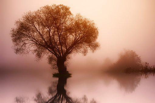 Tree, Nature, Dawn, Landscape, Fog