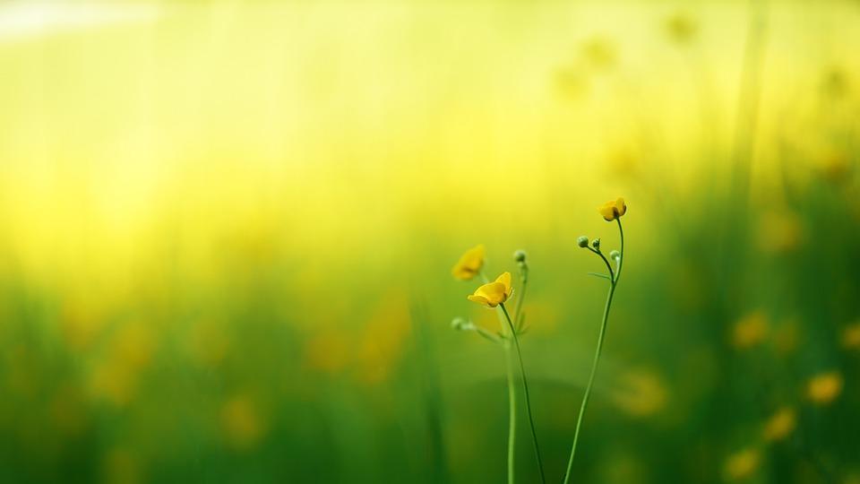 Natur Gras Sommer - Kostenloses Foto auf Pixabay