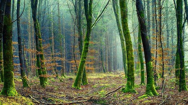 La Naturaleza, Madera, Árbol, Bosque