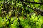 nature, leaf, flora