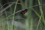 insect, nature, outdoors