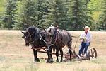 horses, horsepower
