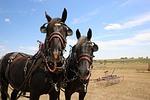 farm, rural, horses