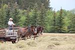 horses, wagon, cart