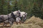 horses, harness