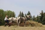 horses, cowboy, farmer