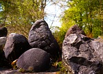 nature, tree, stone