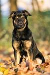dog, animal kingdom, canidae