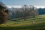 landscape, nature, meadows