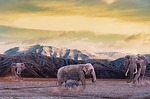 elephant, mountain, dust