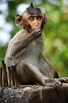 monkey, baby, young
