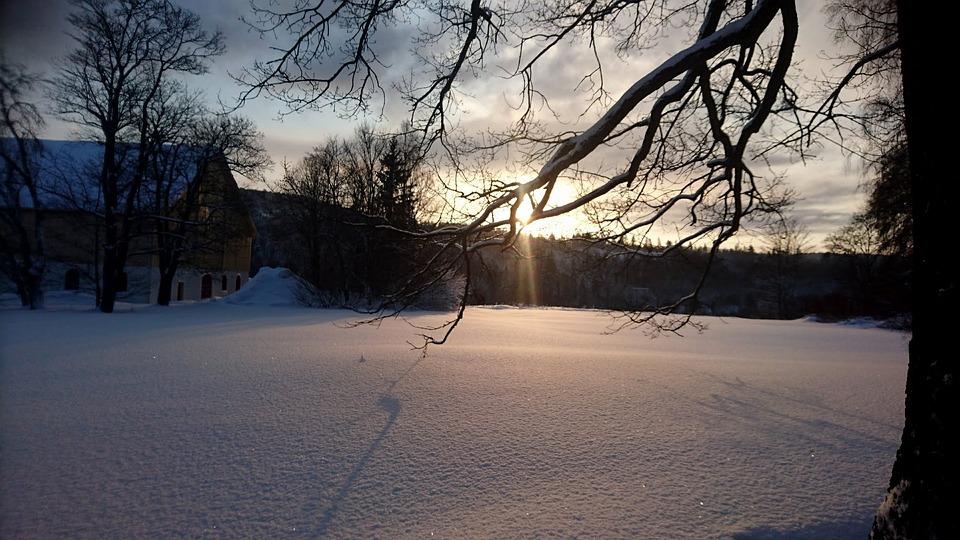 ツリー, 冬, 自然, 雪, スウェーデン, 晴れた日, 太陽, 寒い日