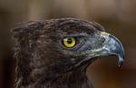 bird of prey, animal world