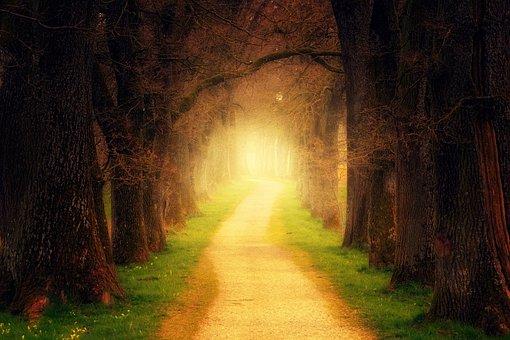 木, フォレスト, パス, 光, 離れた, 森の小道, アベニュー, 自然, 道