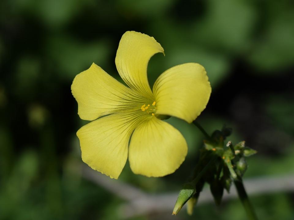 Fleurs Sauvages Fleur Jaune Photo Gratuite Sur Pixabay