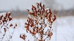 nature, season