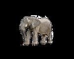 elephant, animal, africa