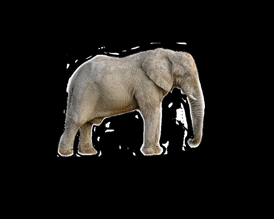 elephant animal africa transparent 183 free photo on pixabay