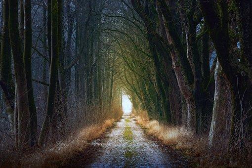 树, 性质, 木, 光, 叶子, 离, 路, 路径, 影子, 光明, 秋季