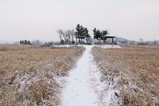 Nature, Scenery, Field