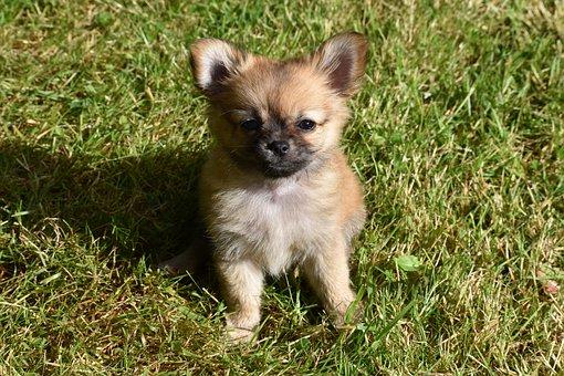 Cute, Animal, Little, Grass, Mammal, Dog