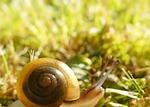 worm, conch, grass