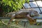 reptile, animal, nature
