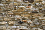 stone wall, wall, brick