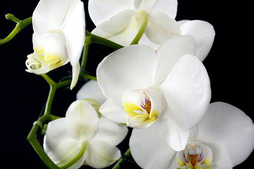 4 000 Free Orchid Flower Orchid Images Pixabay