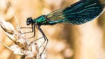 dragonfly, nature, grain