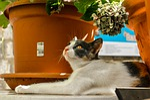cat, domestic, portrait