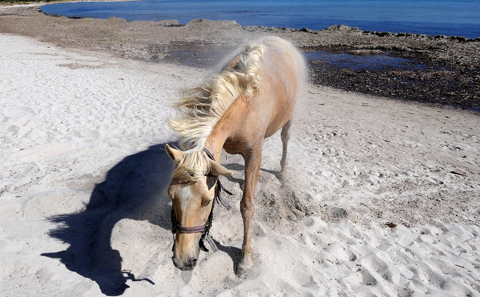 Horse, Beach, Shakes, Mane, Stolen, Shadow, Animal