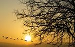 nature, dawn, sunset