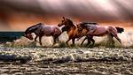 zwierząt, konie, fauny