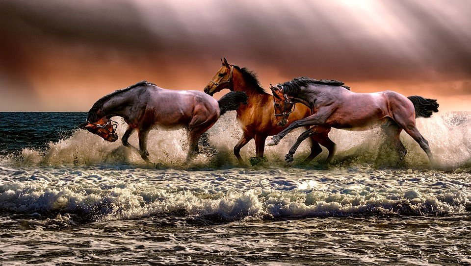 Animal, Horses, Fauna, Nature, Cavalry, Sea, Galopping