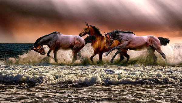 Animal, Horses, Fauna, Nature, Cavalry