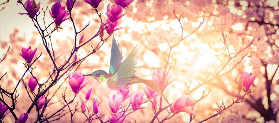 Free photo rose natur landscape spring free image on for Plante 3d gratuit