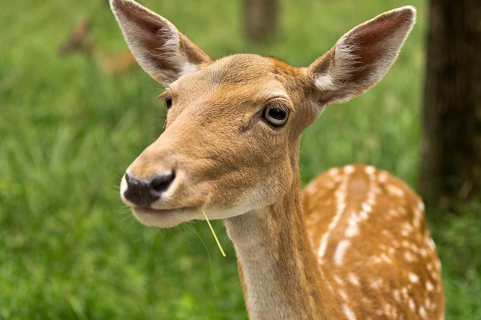 млекопитающие животные фото и название видом деятельности компании
