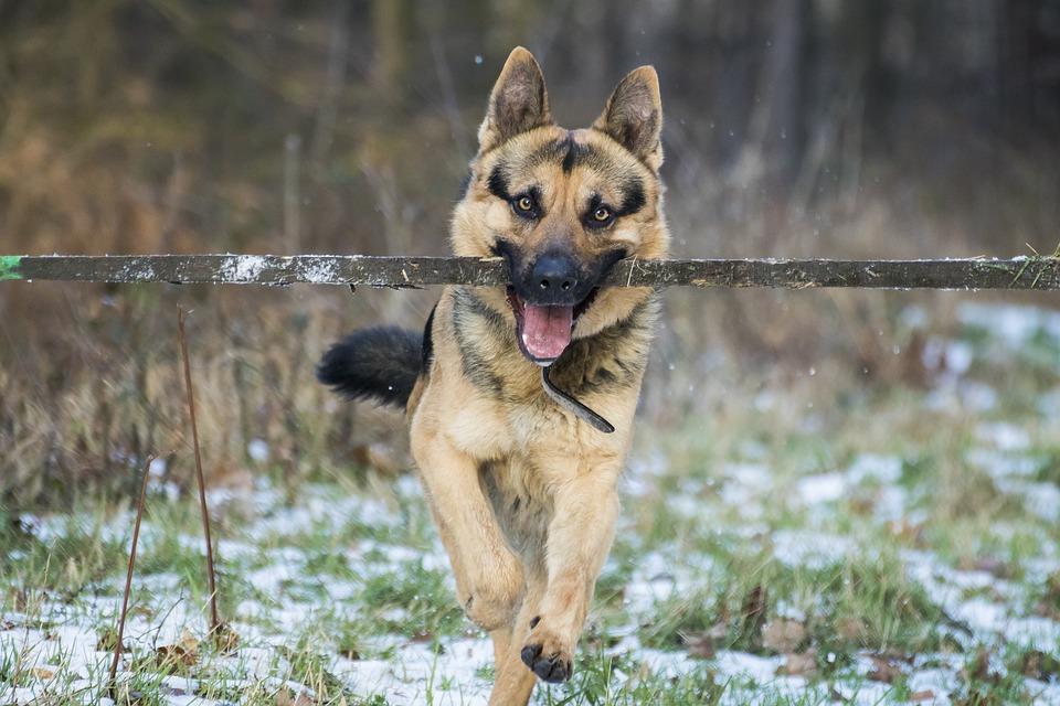Schauen Sie sich die 10 beliebtesten Hunderassen auf TikTok an