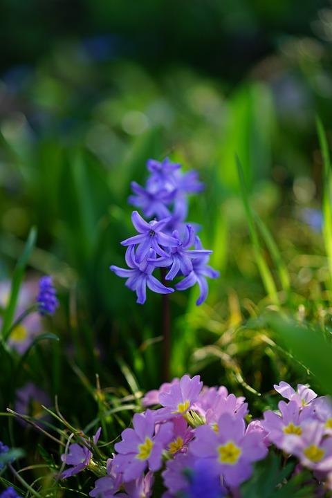 Taman Eceng Gondok Ini Mampu Bunga Foto Gratis Di Pixabay