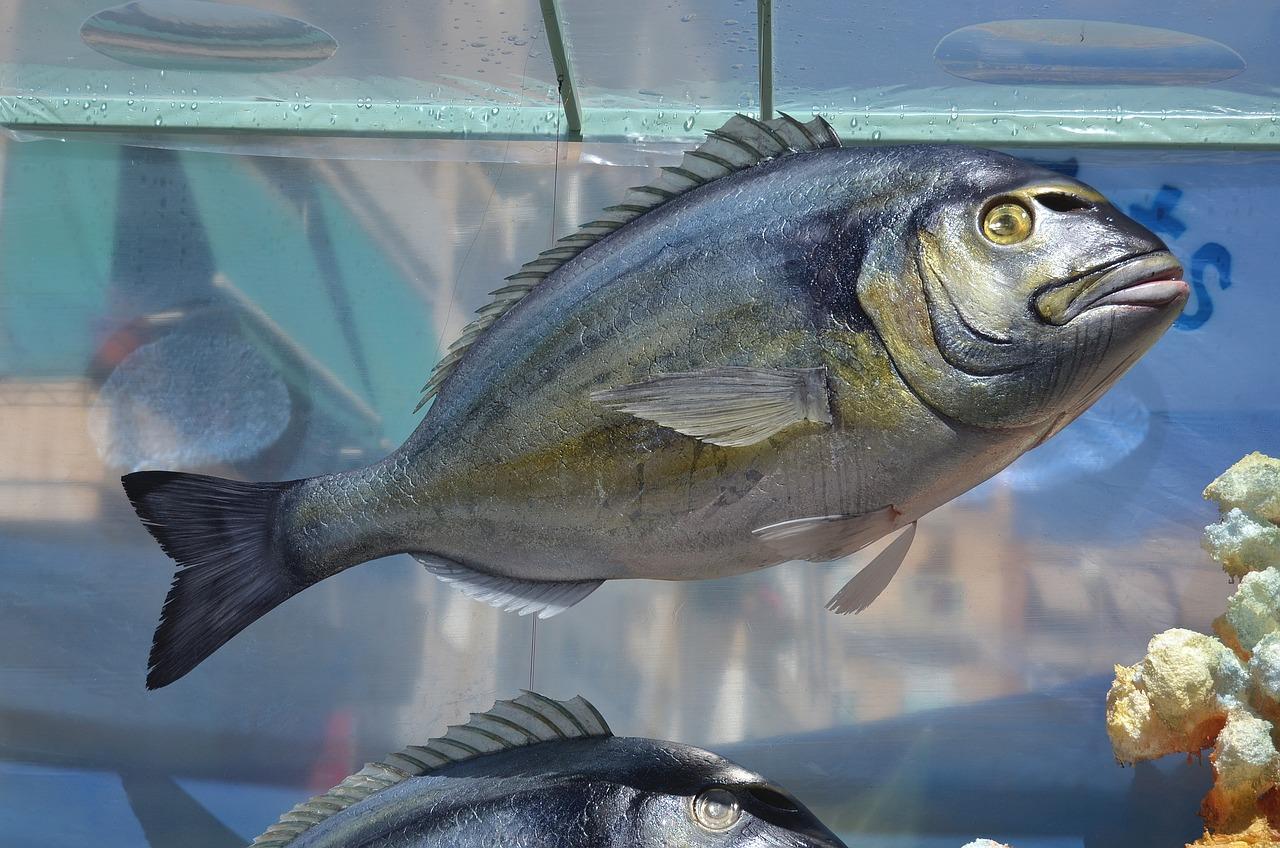 жалею, картинки с рыбами лещ человек