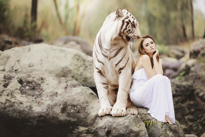 4 000 Striking Tiger Pictures Images Hd