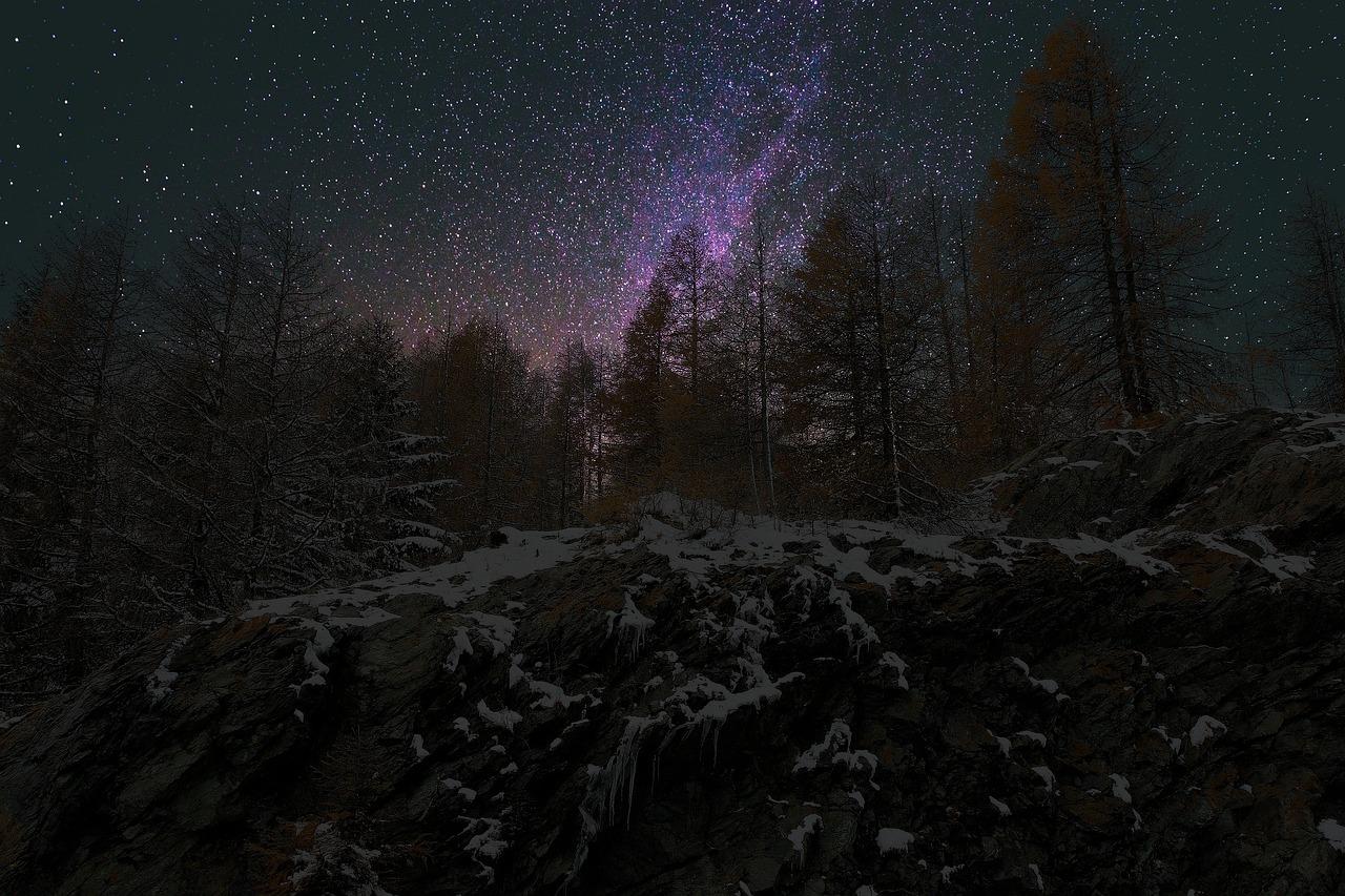 фото лес зима полночь стёбные