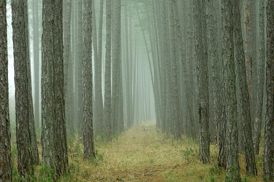 Forest Trees Images Pixabay Download Free Pictures