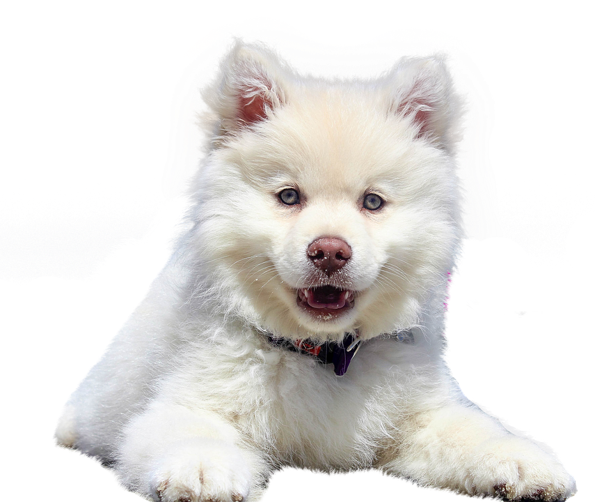 Dog Isolated Animal · Free photo on Pixabay Cute Puppies